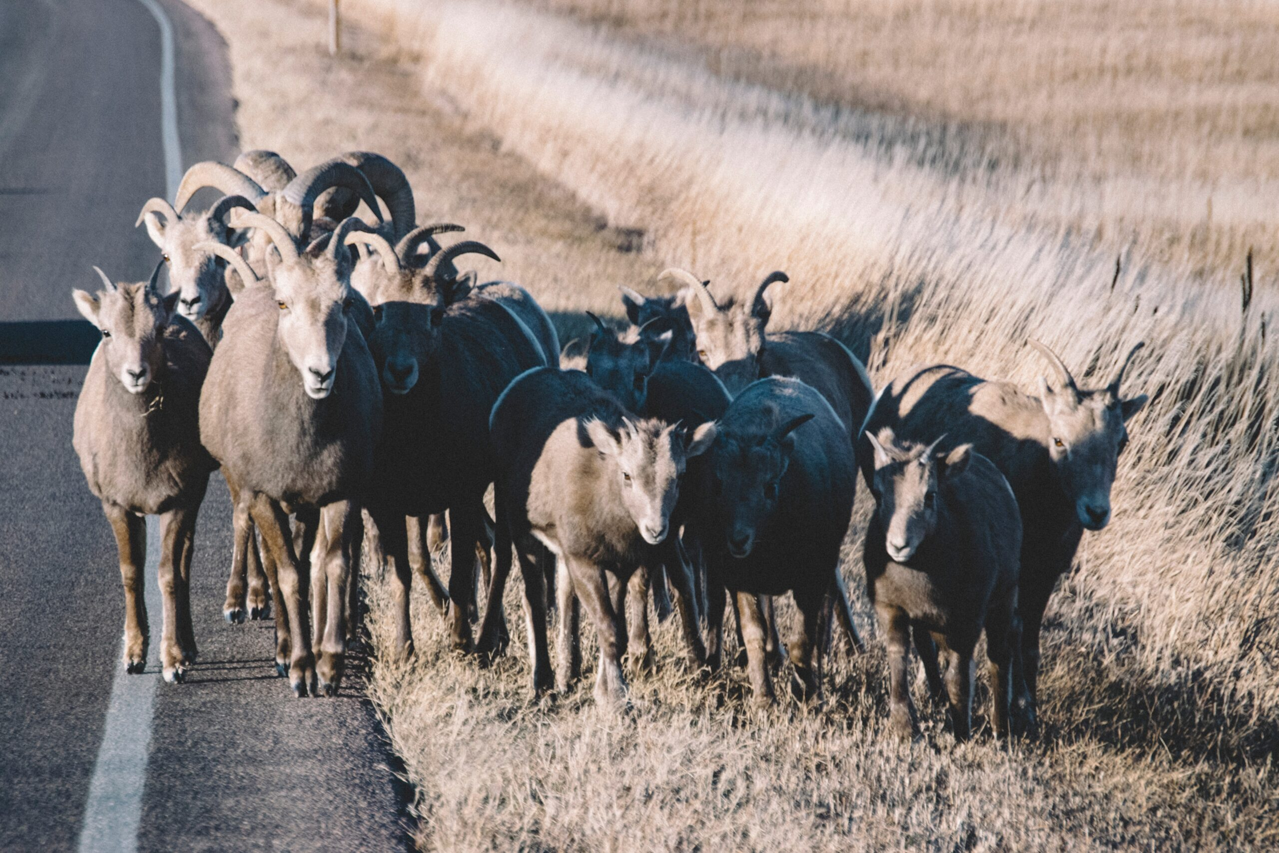 Herd Mentality examples (7 Examples)