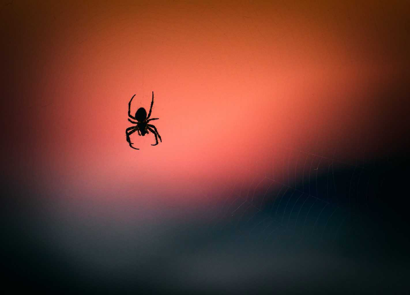 Why am I so paranoid about spiders? (Arachnophobia)